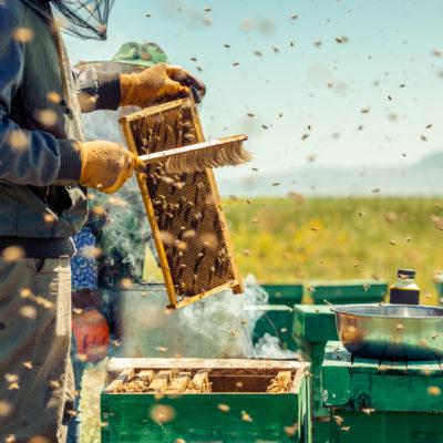 Bienenbesen