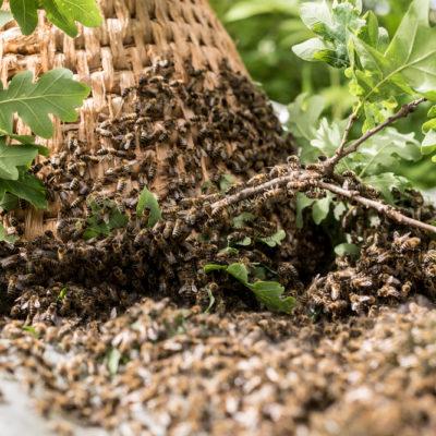 Eichenwald Honig
