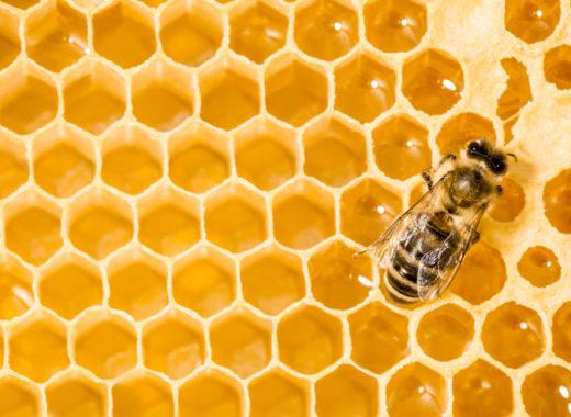 die kommunikation der honigbienen bee info bieneninfo. Black Bedroom Furniture Sets. Home Design Ideas