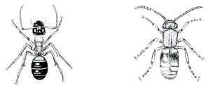 Ameisenbiene