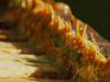propolis-propolisierter-rahmen