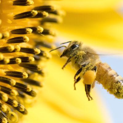 Sommerblüten Honig